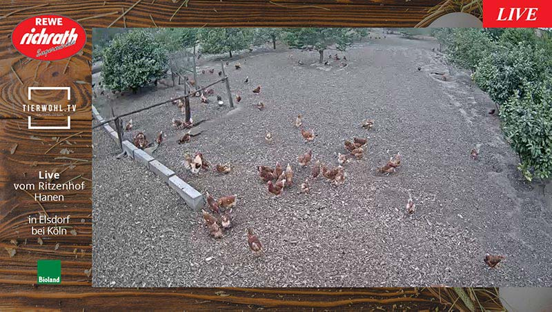 Playlist REWE Richrath - Livestream Hühner